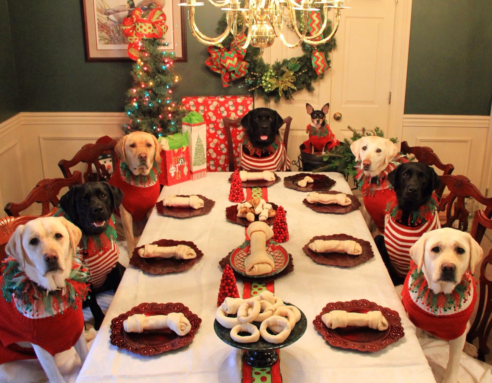 Christmas Dinners For Kids  CHILDREN'S CHRISTMAS TABLE GONE TO THE DOGS