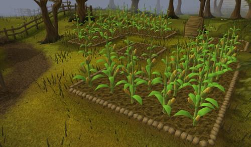 Corn Fallout 4  Sweetcorn RuneScape Wiki Wikia