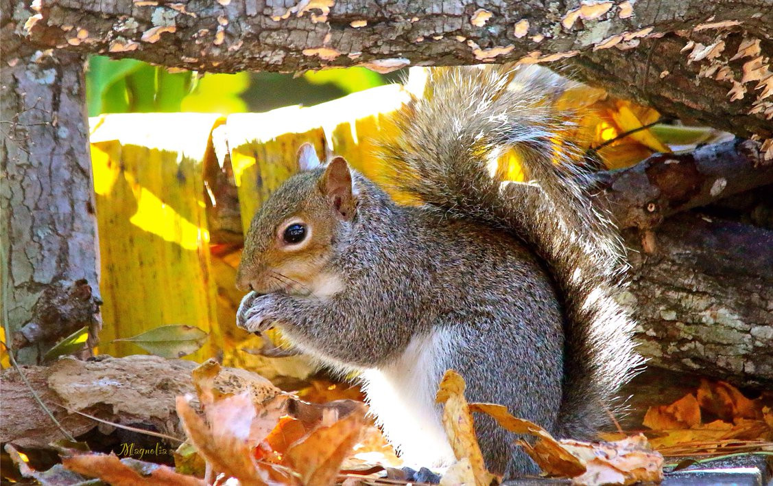 Fallout 4 Squirrel Stew  TX Squirrel by FallOut99 on DeviantArt