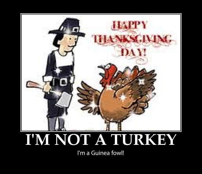 Thanksgiving Turkey Funny  Funny thanksgiving pictures happy thanksgiving pictures