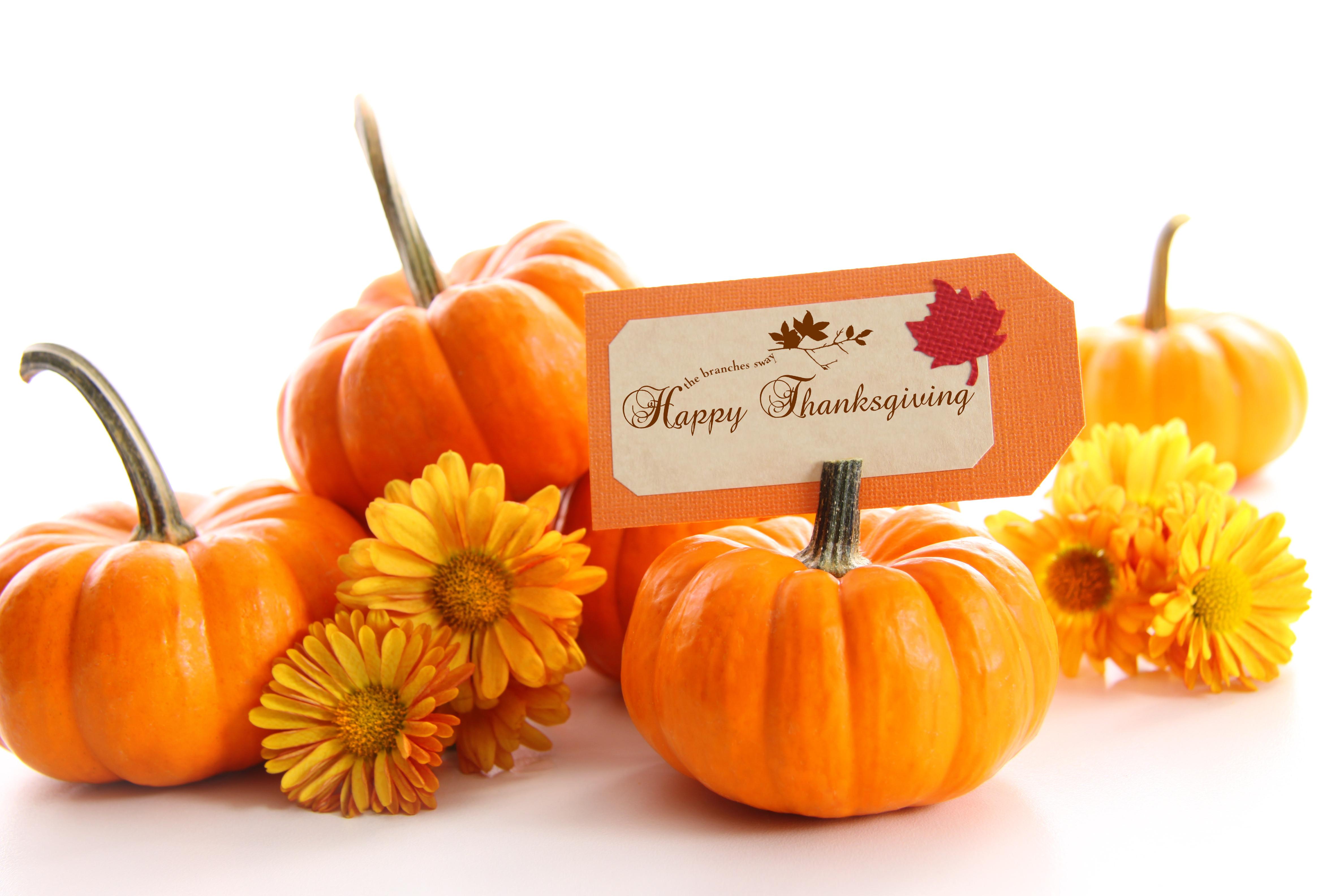 Turkey Designs For Thanksgiving  Thanksgiving