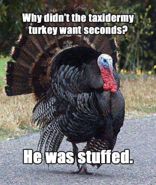 """Turkey Thanksgiving Meme  Meet """"Terrible Thanksgiving Pun Turkey"""""""