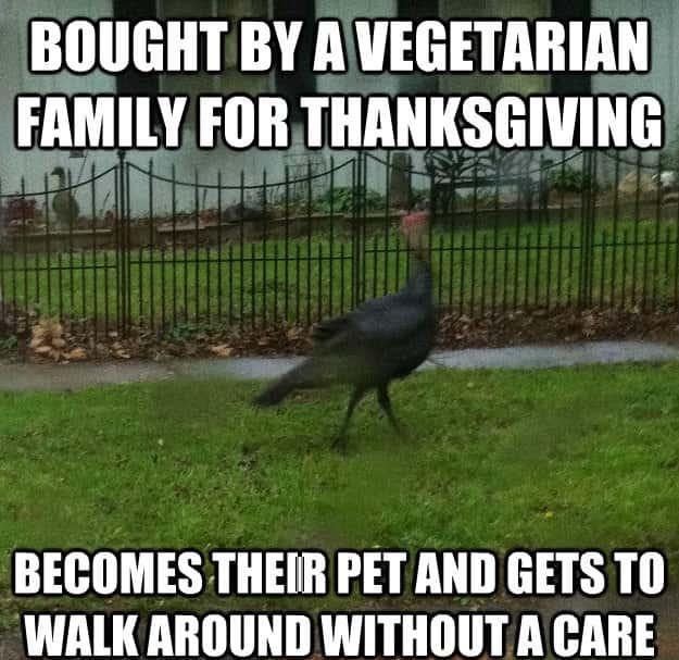 Turkey Thanksgiving Meme  Funny Thanksgiving Memes Thanksgiving Meme 2018 Turkey Memes