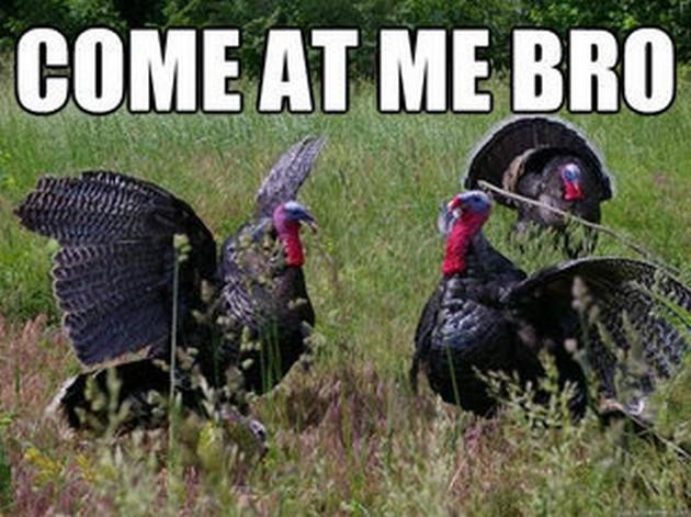 Turkey Thanksgiving Meme  Thanksgiving Memes 21 Pics