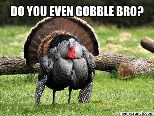 Turkey Thanksgiving Meme  Tickled Turkey