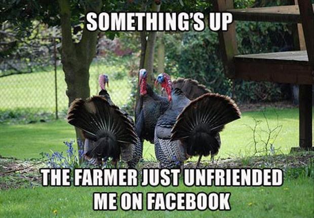 Turkey Thanksgiving Meme  30 Funny animal captions part 9 30 pics