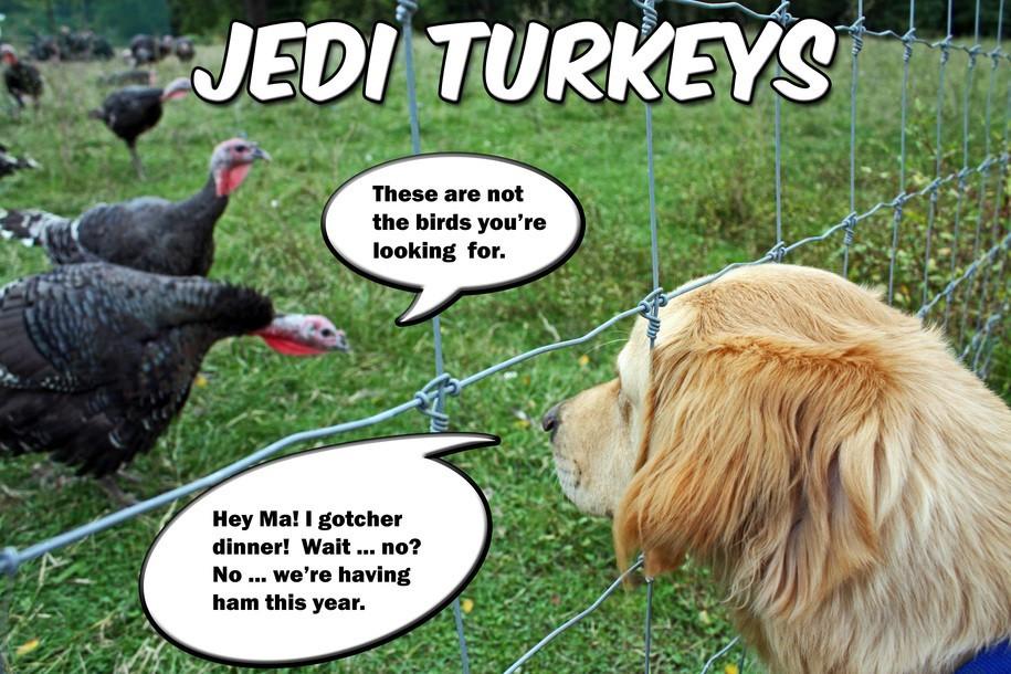 Turkey Thanksgiving Meme  PWB Furrsdai Furries and Feather It z Thanksgibbin Dai