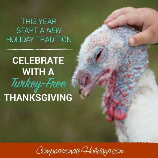 Vegan Thanksgiving Meme  97 best Ve arian Quotes images on Pinterest