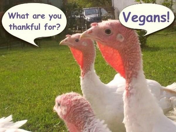 Vegan Thanksgiving Meme  Happy Vegan Thanksgiving Frugal Vegan Stuffing