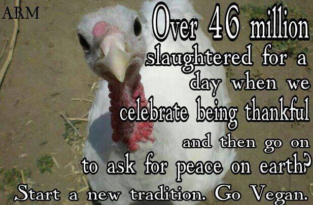 Vegan Thanksgiving Meme  218 best Ve arian To Vegan images on Pinterest